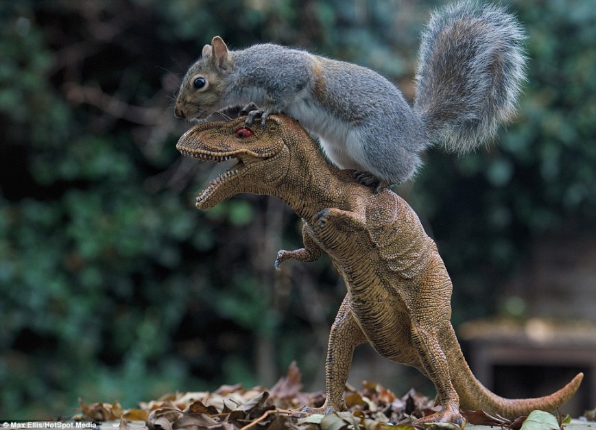 dinosquirrel