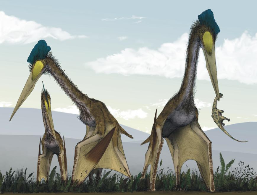 Life_restoration_of_a_group_of_giant_azhdarchids,_Quetzalcoatlus_northropi,_foraging_on_a_Cretaceous_fern_prairie
